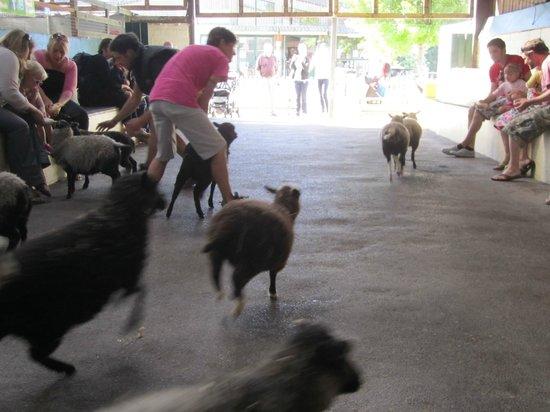 Farmer Palmer's Farm Park: Arrival of the lambs