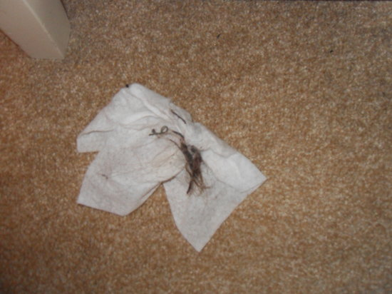 Trelawney Hotel : Clumps of hair on bedroom carpet