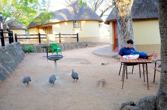 Pretoriuskop Restcamp: zona hut