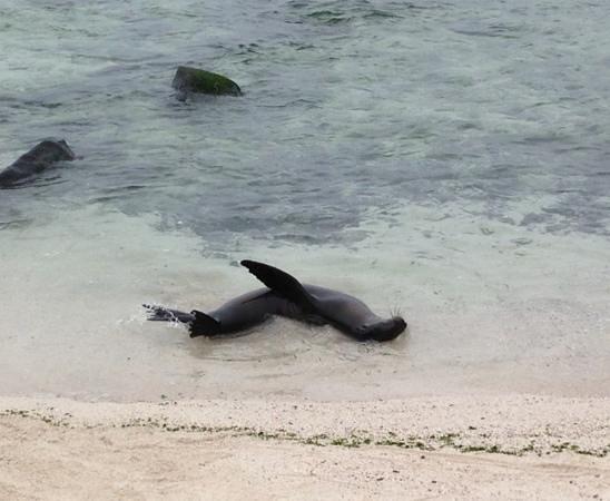 Administracion Turistica del Parque Nacional Galapagos : Frolicking