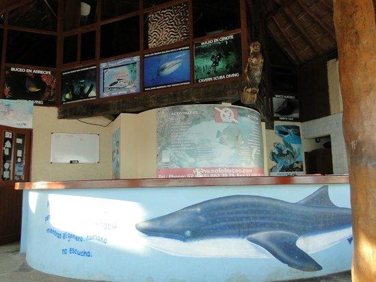 Solo Buceo Dive Shop : Solo Buceo