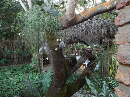 Pousada Berro do Jeguy: Saguis visitam constantemente a pousada