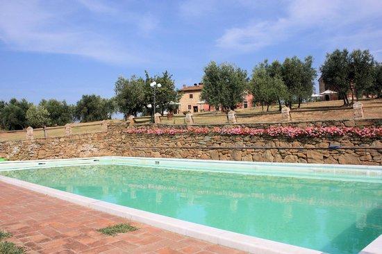 Fattoria Castellina: La piscina