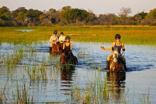 Macatoo Horseback Safari Camp : Ride