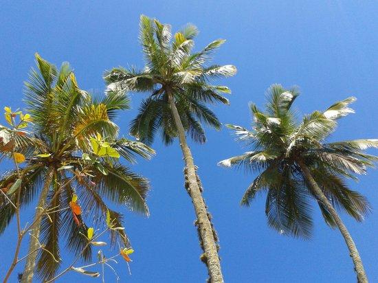 Grande das Palmas Beach: Coqueiros em Palmas