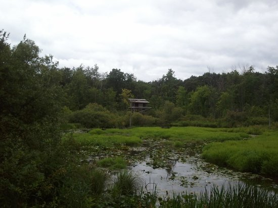 Stony Creek Metropark : A View From One of the Wooded Trails
