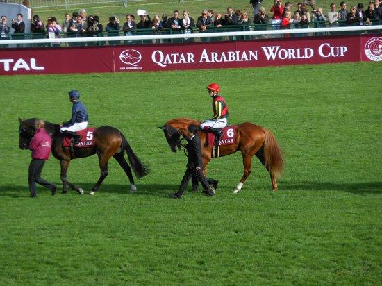 Longchamp Racecourse: 2012年凱旋門賞のオルフェーブル