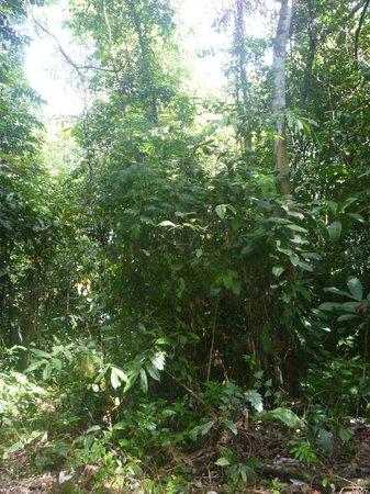 Green Lodge Tangkahan: jungle