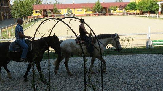 Cascina Corte Grande: Cavalli in uscita