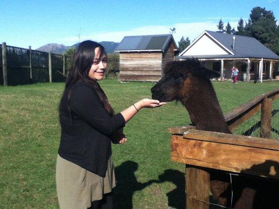 Wai ariki Farm Park, Cafe & Gallery: Enjoyable afternoon had by all!