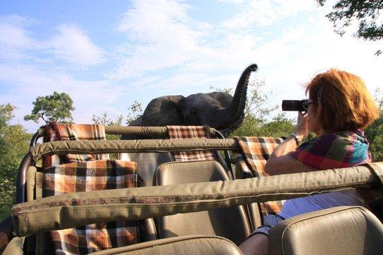 Mohlabetsi Safari Lodge: on safari at Mohlabetsi