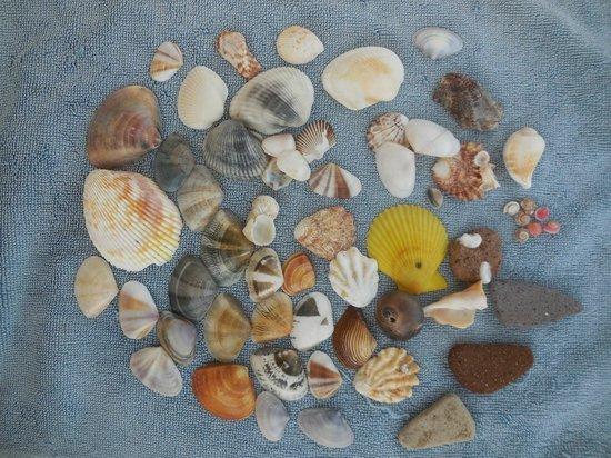 Coco Beach Resort : Дары отлива