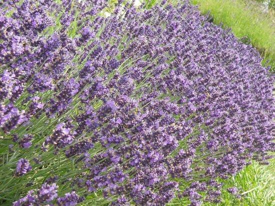 Giardino della Flora Appenninica: Angolo delle farfalle