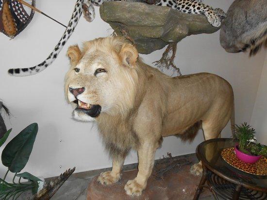Bavaria Safari Hotel: 9