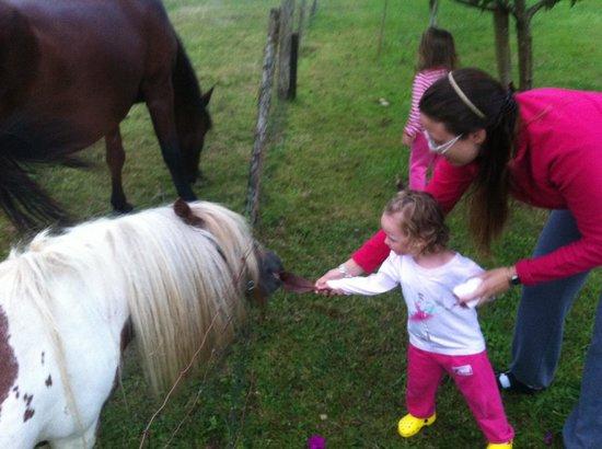 El Molino de Tresgrandas: alimentando al pony