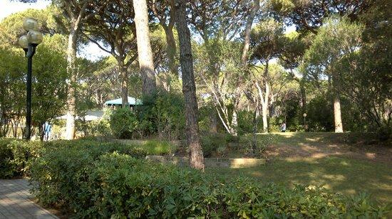 Cieloverde Camping Village: Immerso nella pineta