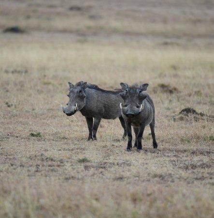 Fairmont Mara Safari Club: Pumba