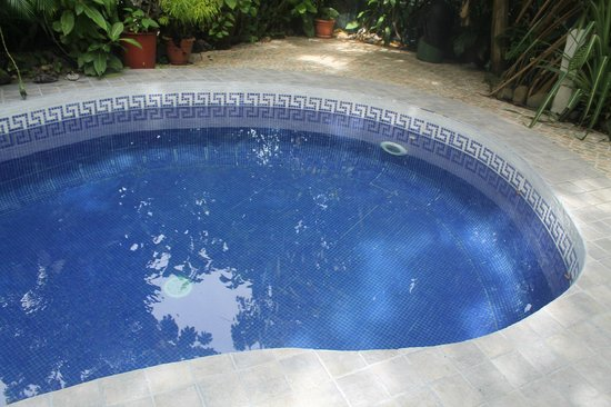 Hotel Mono Azul: The pool was always clean, and lots of fun!