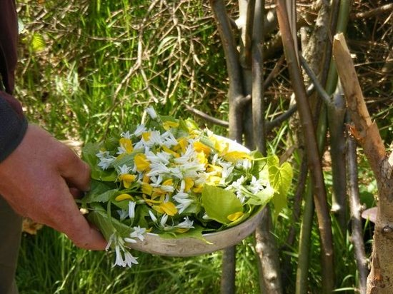 Ballygarvan, Ireland: A foraged Salad Irish Stlye