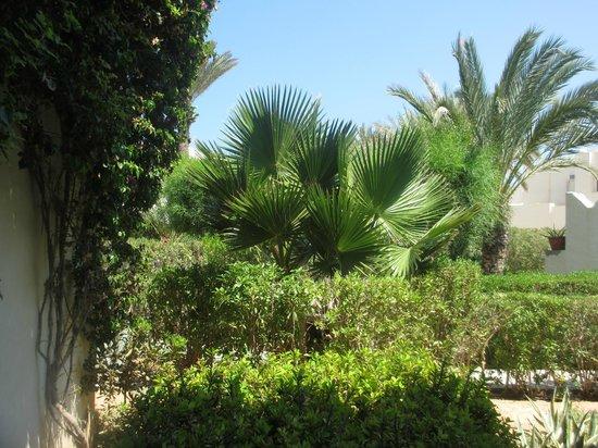 SENTIDO Djerba Beach : vue chambre