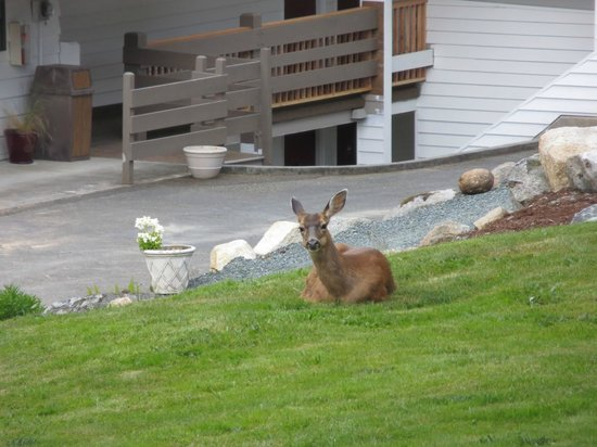 Anacortes Ship Harbor Inn: Wildlife!
