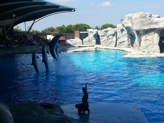 Riccione, Italia: Show dei delfini