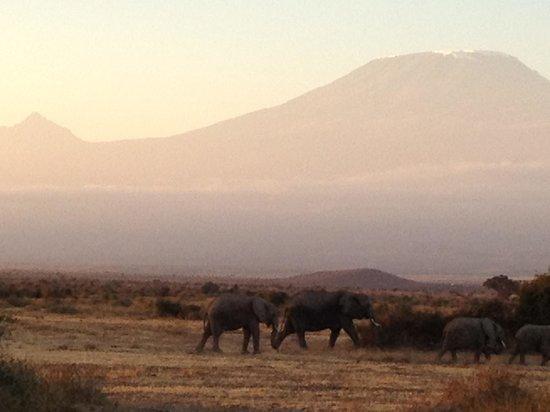 Tortilis Camp: Mt Kili