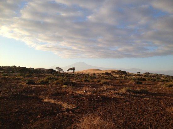 Tortilis Camp: Amboseli