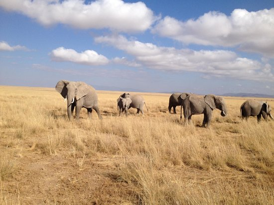 Tortilis Camp: Amboseli elephants