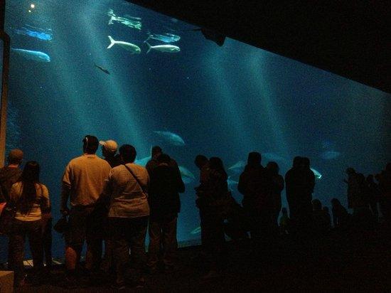 Rockpool Picture Of Monterey Bay Aquarium Monterey