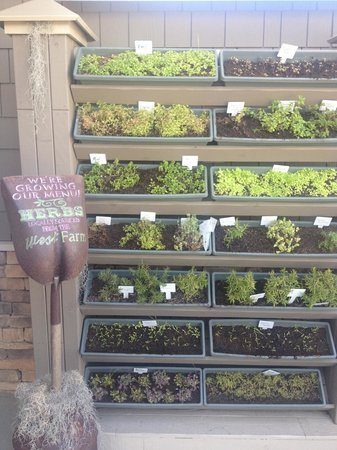 West Inn & Suites Carlsbad: Bistro grows their own herbs