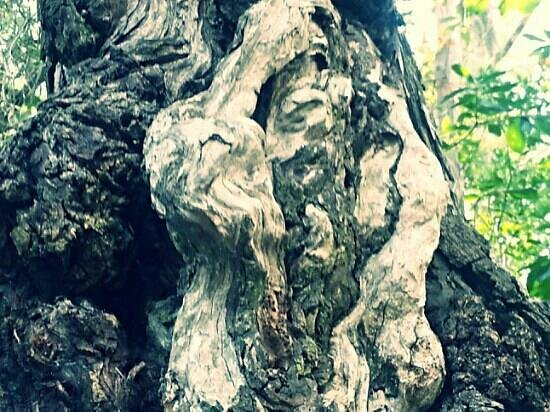 Turkey Creek Nature Trail : cool!