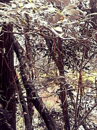 Turkey Creek Nature Trail: filter