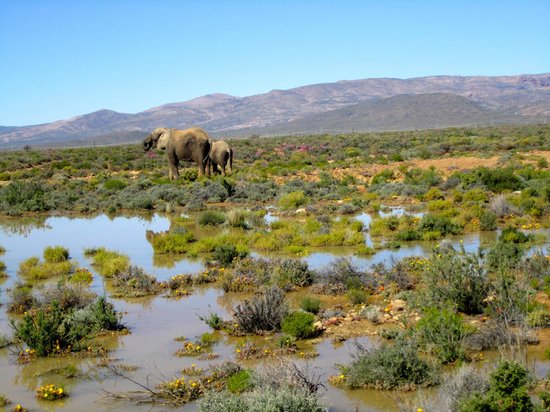 Inverdoorn Game Reserve : elephants