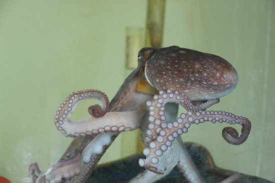 Nature Center of Cape May: Octopus in the aquarium building