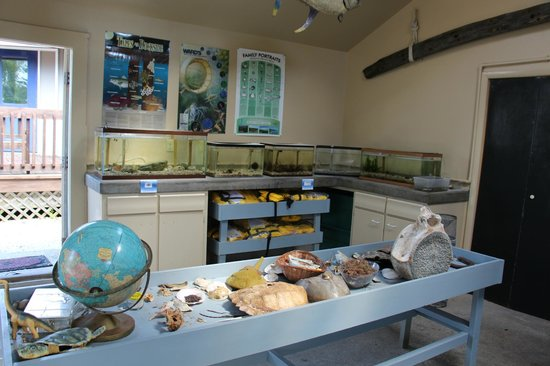 Nature Center of Cape May: Aquarium displays and table with shells, bones and marine items to examine