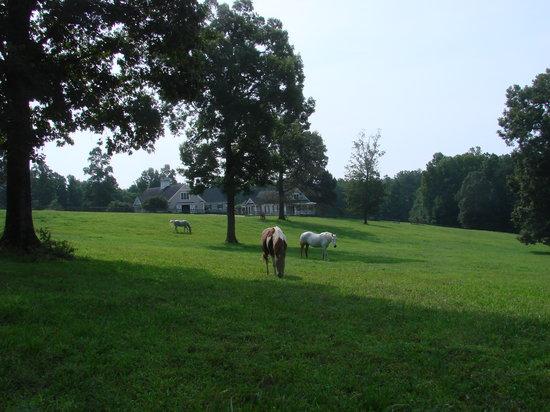 Barking Fox Farm Guest House