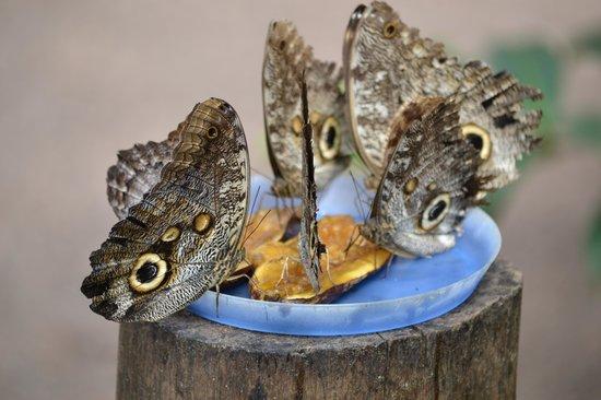 Mariposas de Mindo - Butterfly Garden : alimento