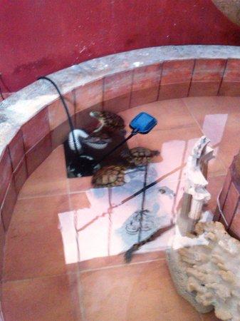Hotel Posada Edem : Tortugas