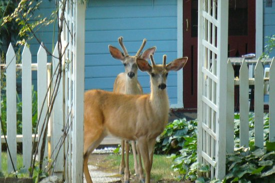 Piety Hill Cottages Motel and B&B Inn : A couple of the locals visiting Apple Blossom Cottage
