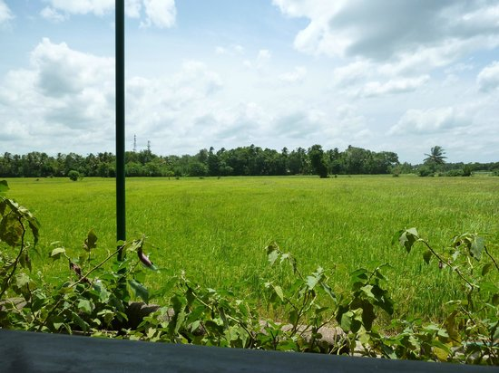 Samagi Guest House & Cottage : rice paddies by the cottage
