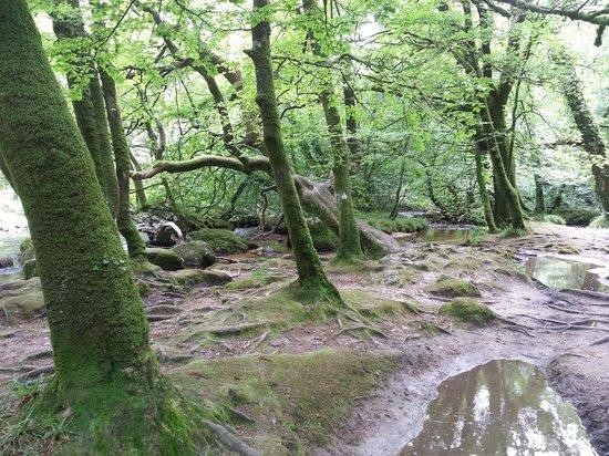 Cornish Heritage Safaris: Golitha Falls
