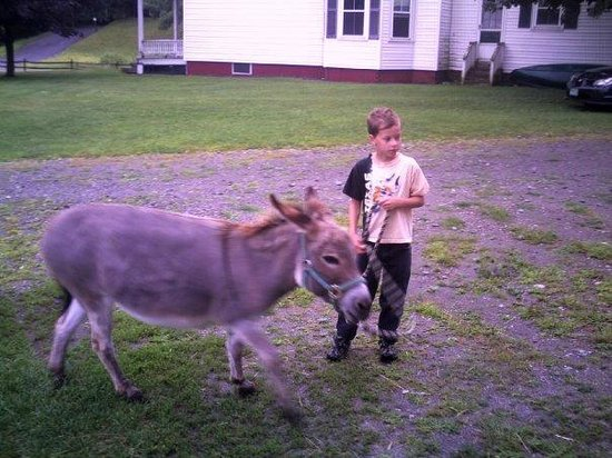 Retreat Farm: Donkey!