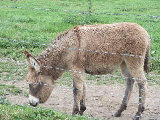 Les Mout'anes: Another donkey