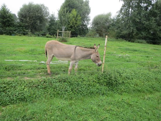 Les Mout'anes: And another donkey