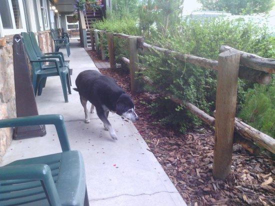 Pony Express Motel: Owners dog