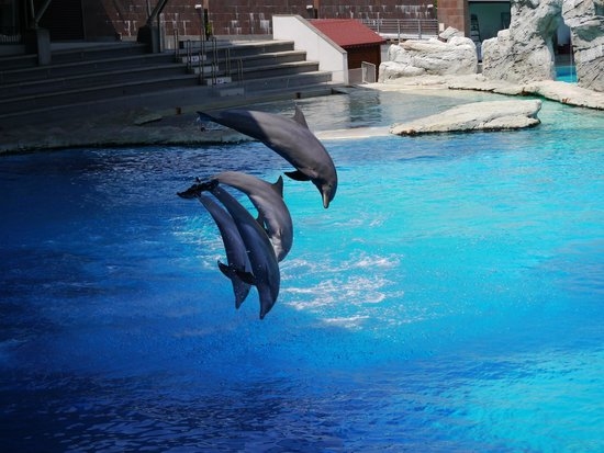 Riccione, Italia: Show de dauphins magnifique