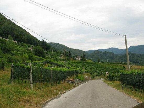 Li Dai Tos B&B: Ramandolo vineyard