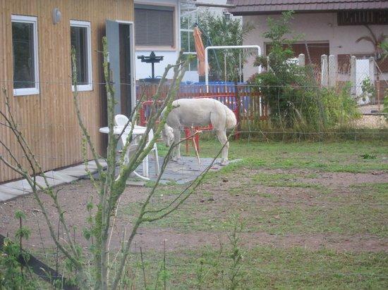Sun Parc Hotel: Lama neighbors