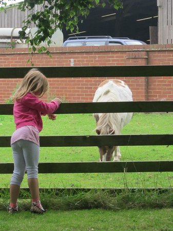 Croft Farm Bed and Breakfast : my daughter talking to Nutty